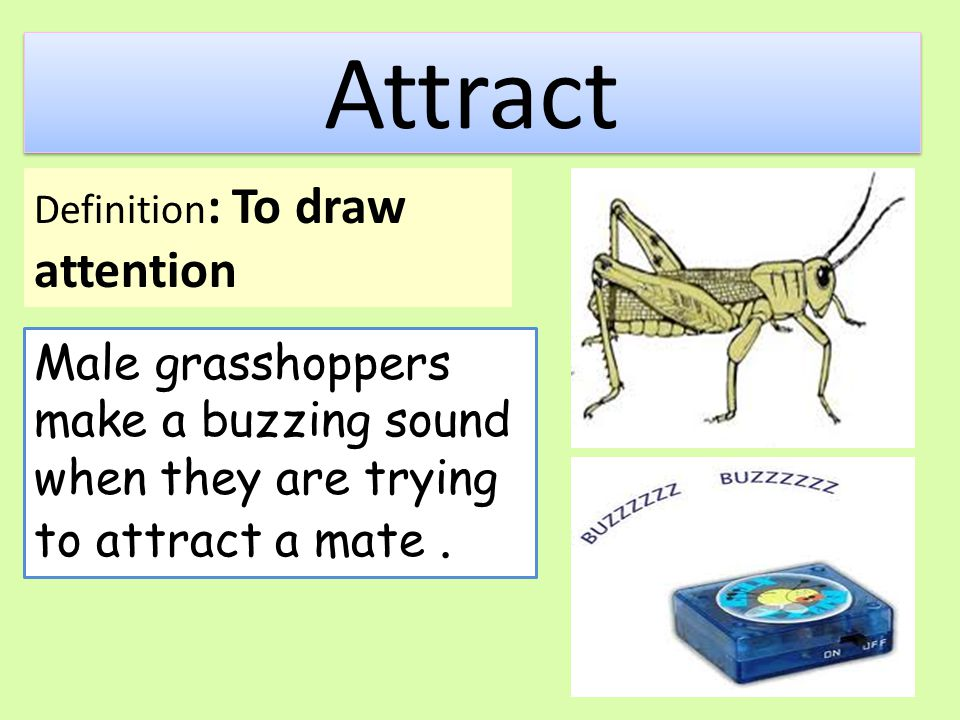 Attract Male grasshoppers make a buzzing sound when they are trying to attract a mate.