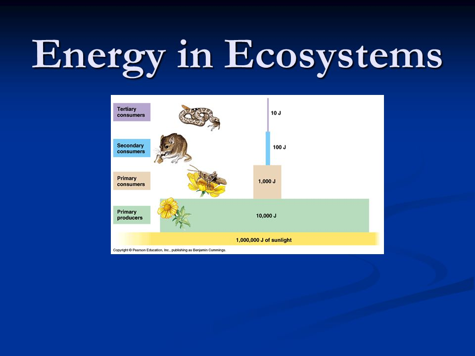 All organisms require energy to live Recall Photosynthesis: Recall Photosynthesis: Energy from the sun is captured .