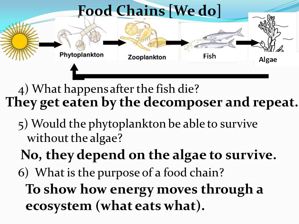 Food Chains [We do] 4) What happens after the fish die.
