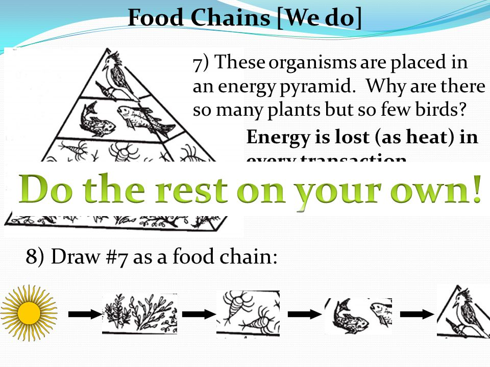 Exit Slip: 1) Why do carnivores at the top of the food chain have to eat so much more than herbivores at the bottom.