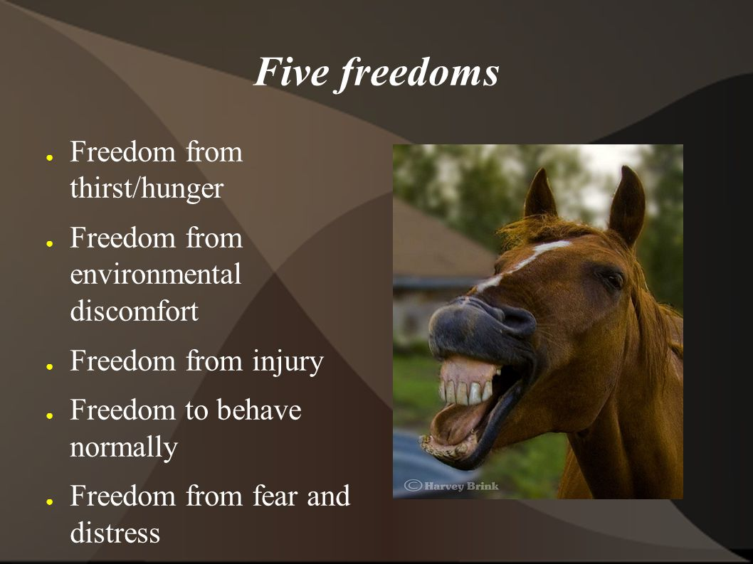 Five freedoms ● Freedom from thirst/hunger ● Freedom from environmental discomfort ● Freedom from injury ● Freedom to behave normally ● Freedom from fear and distress