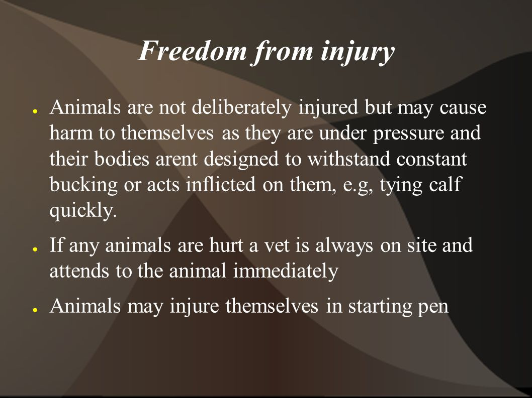 Freedom from injury ● Animals are not deliberately injured but may cause harm to themselves as they are under pressure and their bodies arent designed to withstand constant bucking or acts inflicted on them, e.g, tying calf quickly.