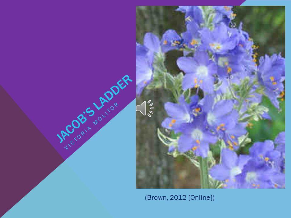 JACOB'S LADDER VICTORIA MOLITOR (Brown, 2012 [Online])