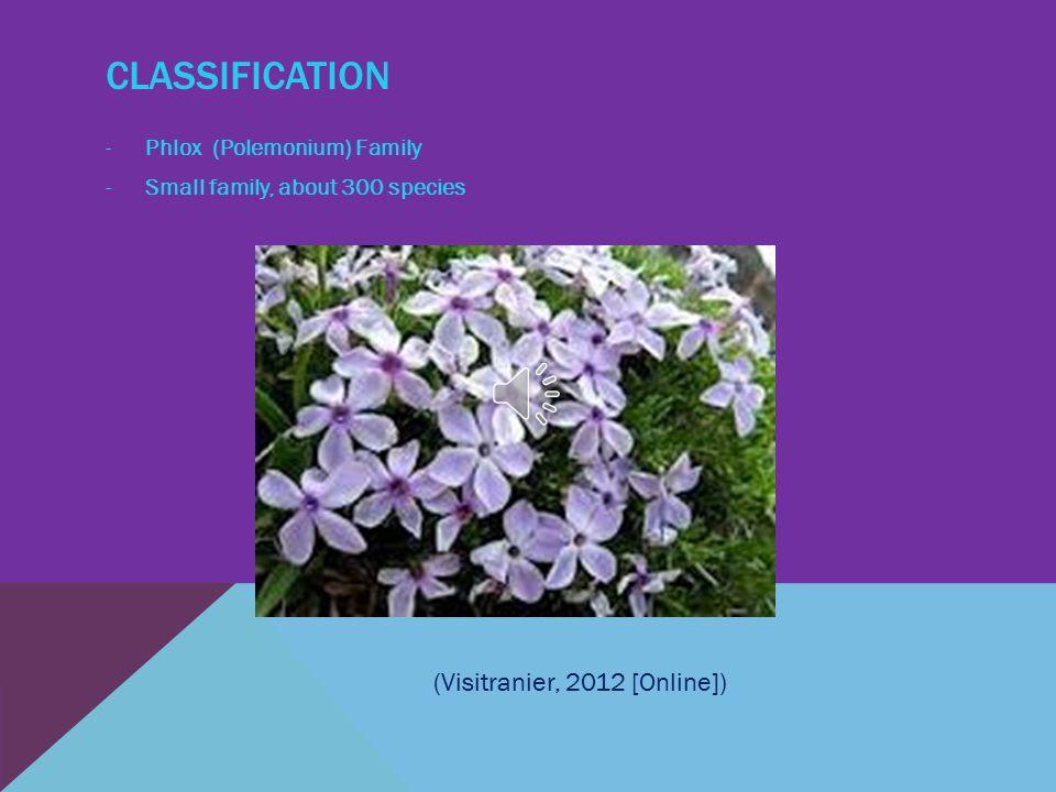 CLASSIFICATION -Phlox (Polemonium) Family -Small family, about 300 species (Visitranier, 2012 [Online])
