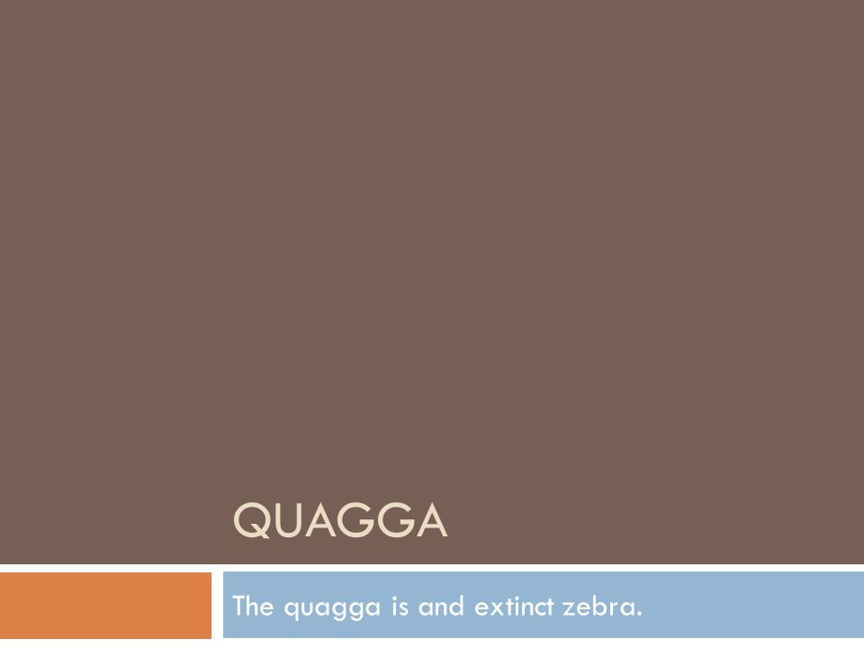 QUAGGA The quagga is and extinct zebra.