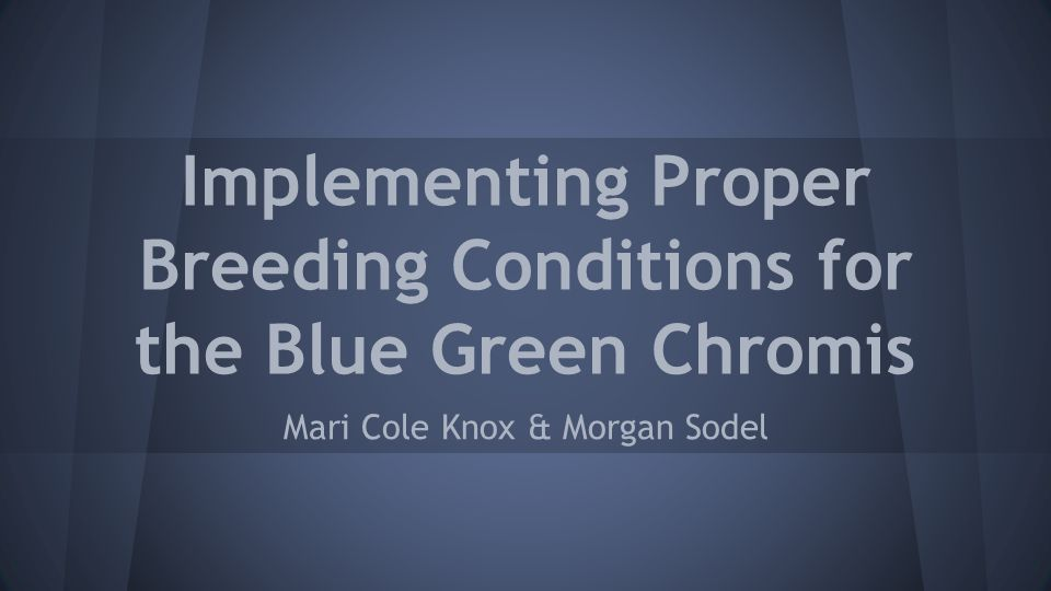 Implementing Proper Breeding Conditions for the Blue Green Chromis Mari Cole Knox & Morgan Sodel
