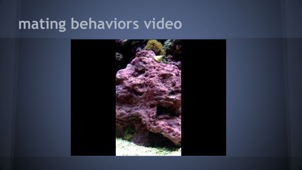 mating behaviors video