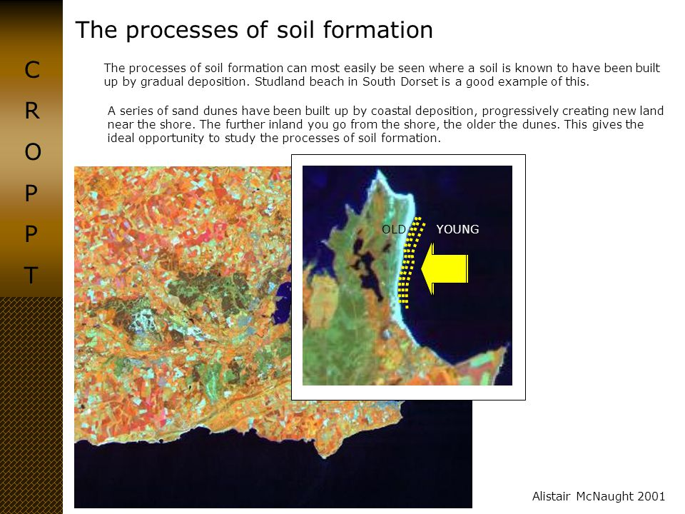 The processes of soil formation CROPPTCROPPT Alistair McNaught 2001 The processes of soil formation can most easily be seen where a soil is known to h