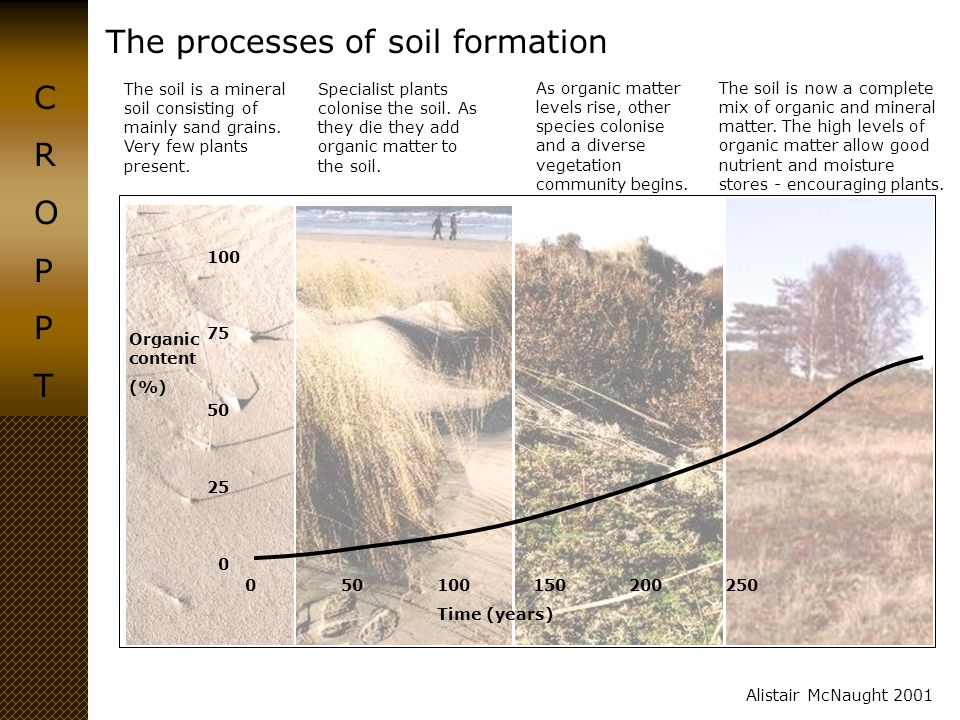The processes of soil formation CROPPTCROPPT Alistair McNaught 2001 The soil is a mineral soil consisting of mainly sand grains. Very few plants prese