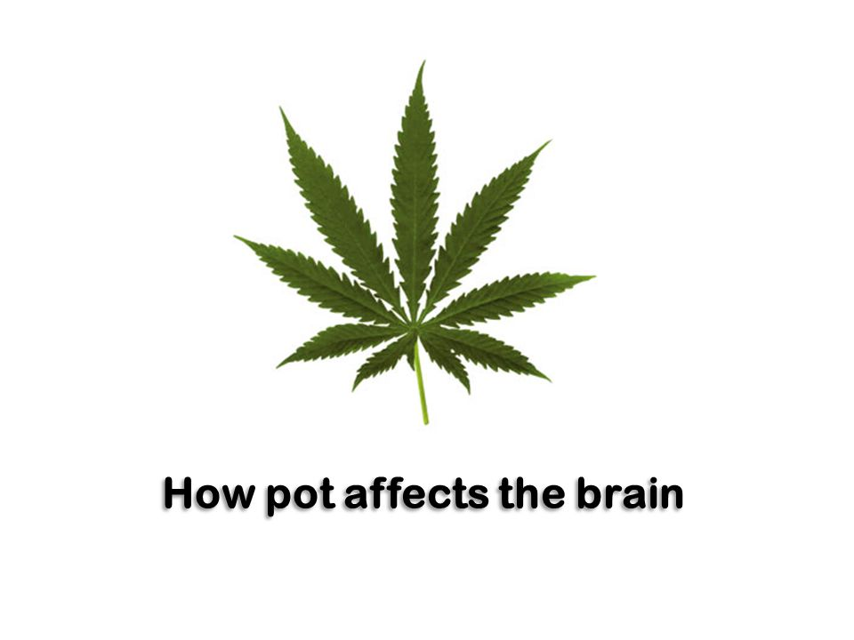 How pot affects the brain