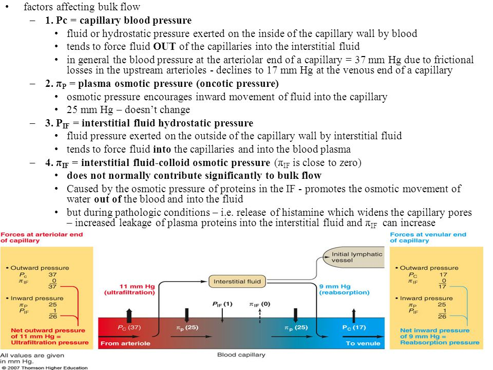 21-43 Net exchange of fluid across capillaries Net exchange pressure = (Pc + π IF ) – ( π P + P IF ) = outward pressure – inward pressure two pressures forcing fluid out of the plasma are capillary blood pressure and interstitial fluid-osmotic pressure two pressures forcing fluid into the plasma are plasma-osmotic pressure and interstitial fluid hydrostatic pressure the imbalance between the forces produces a net exchange of fluid at a given point along the capillary wall as the blood enters the capillary – outward forces exceed that of inward and fluid is forced out into the interstitial fluid (no protein movement!) – ultrafiltration forces result at the venular end the inward pressure now exceeds the outward pressure and reabsorption will take place as the blood moves through the capillary – pressure drops so the amount of fluid moving out of the blood drops as the blood travels through the capillary region and progressively increasing amounts of fluid re-enter the blood as the blood reaches the venular end of the capillary BUT these pressure values are controversial