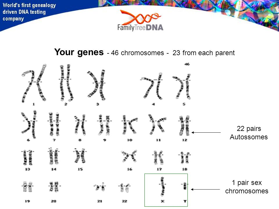 Your genes - 46 chromosomes - 23 from each parent 1 pair sex chromosomes 22 pairs Autossomes