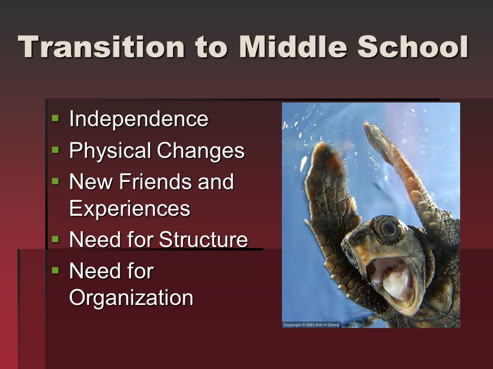 Transition to Middle School  Independence  Physical Changes  New Friends and Experiences  Need for Structure  Need for Organization