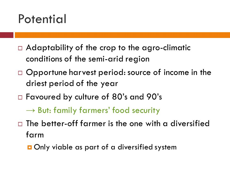 Potential  Adaptability of the crop to the agro-climatic conditions of the semi-arid region  Opportune harvest period: source of income in the driest period of the year  Favoured by culture of 80's and 90's → But: family farmers' food security  The better-off farmer is the one with a diversified farm  Only viable as part of a diversified system