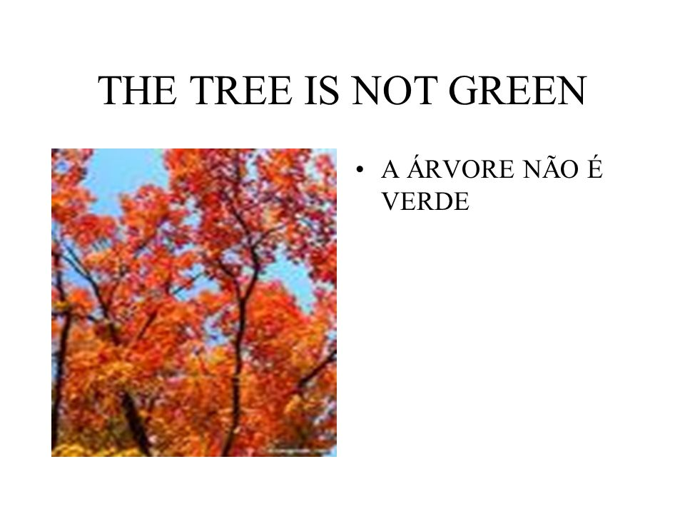 THE TREE IS NOT GREEN A ÁRVORE NÃO É VERDE