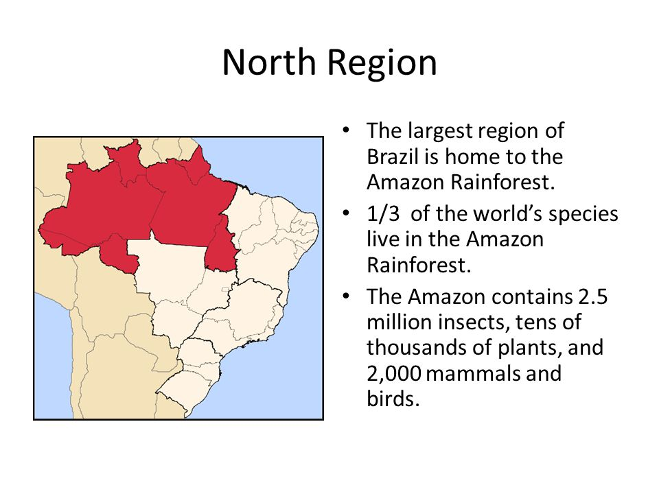North Region The largest region of Brazil is home to the Amazon Rainforest.