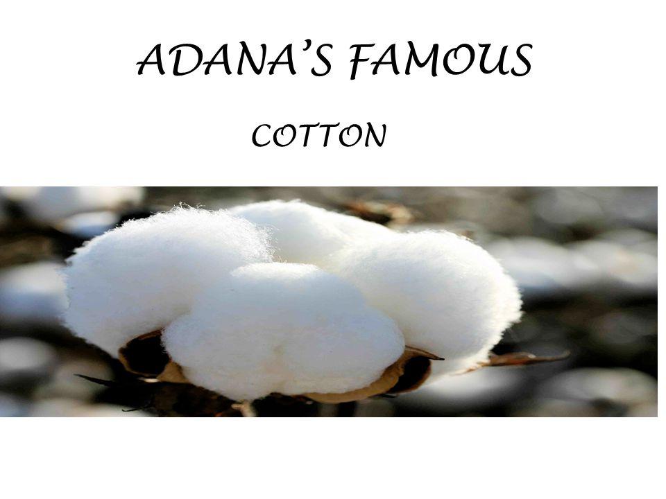 ADANA'S FAMOUS COTTON