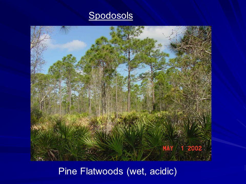 Spodosols Pine Flatwoods (wet, acidic)