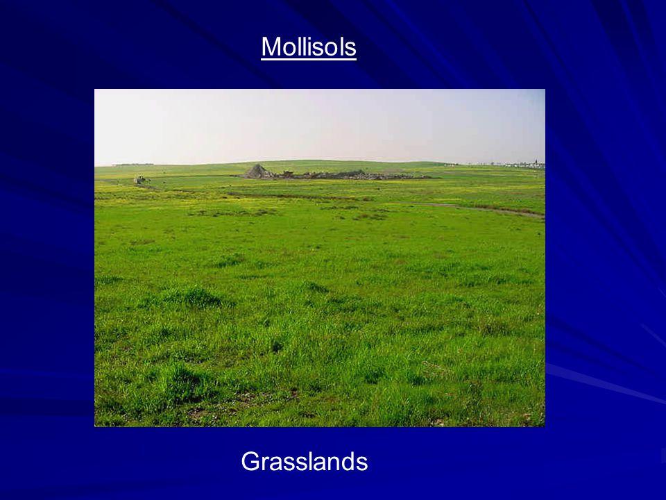 Mollisols Grasslands