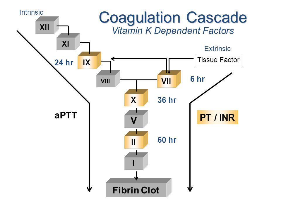 Fibrin Clot XII Coagulation Cascade Vitamin K Dependent Factors Intrinsic Extrinsic XI IX VIII VII X V II I 6 hr 36 hr 60 hr 24 hr Tissue Factor PT /