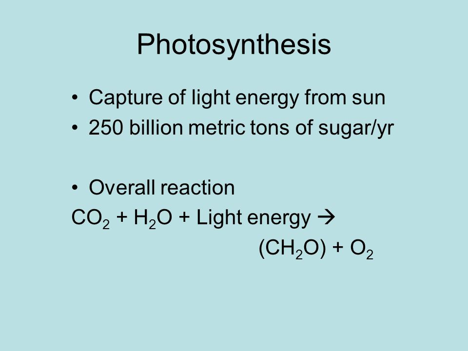 Photosynthesis Capture of light energy from sun 250 billion metric tons of sugar/yr Overall reaction CO 2 + H 2 O + Light energy  (CH 2 O) + O 2
