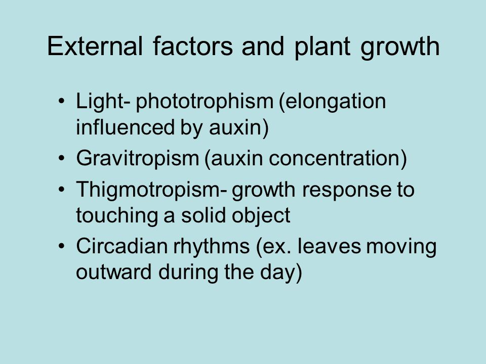 External factors and plant growth Light- phototrophism (elongation influenced by auxin) Gravitropism (auxin concentration) Thigmotropism- growth response to touching a solid object Circadian rhythms (ex.