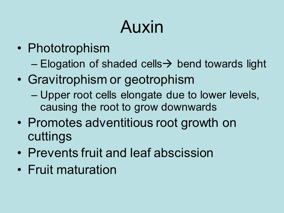 Auxin Phototrophism –Elogation of shaded cells  bend towards light Gravitrophism or geotrophism –Upper root cells elongate due to lower levels, causing the root to grow downwards Promotes adventitious root growth on cuttings Prevents fruit and leaf abscission Fruit maturation