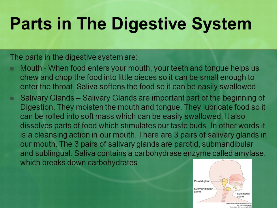 Parts in The Digestive System The parts in the digestive system are: Mouth - When food enters your mouth, your teeth and tongue helps us chew and chop the food into little pieces so it can be small enough to enter the throat.