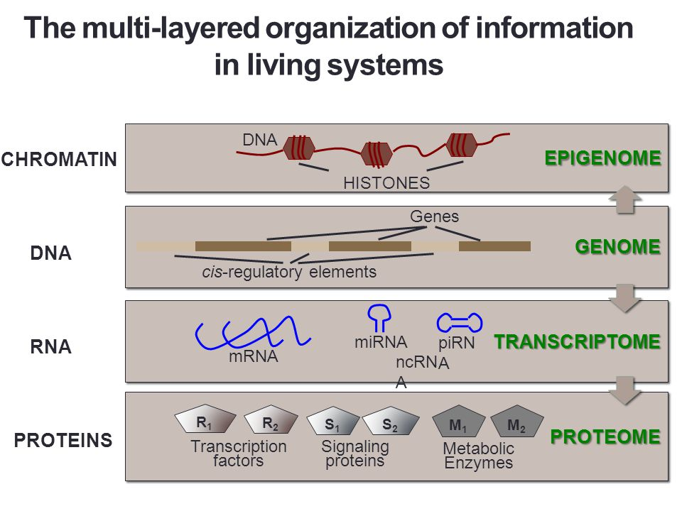 Biological networks at all cellular levels Genome RNA Proteins Transcription Transcriptional gene regulation Post-transcriptional gene regulation Protein & signaling networks Metabolic networks Translation Modification Dynamics