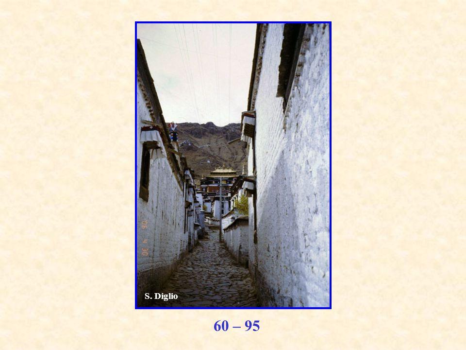 60 – 95 S. Diglio