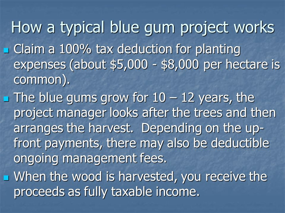 How a typical blue gum project works Claim a 100% tax deduction for planting expenses (about $5,000 - $8,000 per hectare is common).