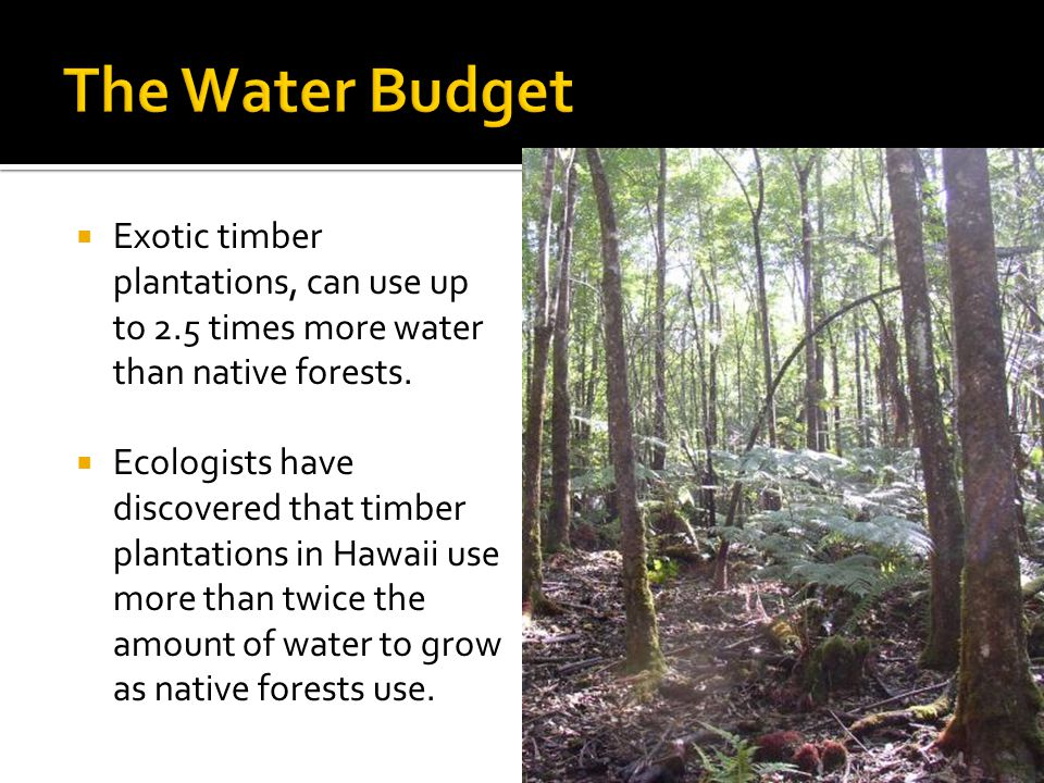  Exotic timber plantations, can use up to 2.5 times more water than native forests.