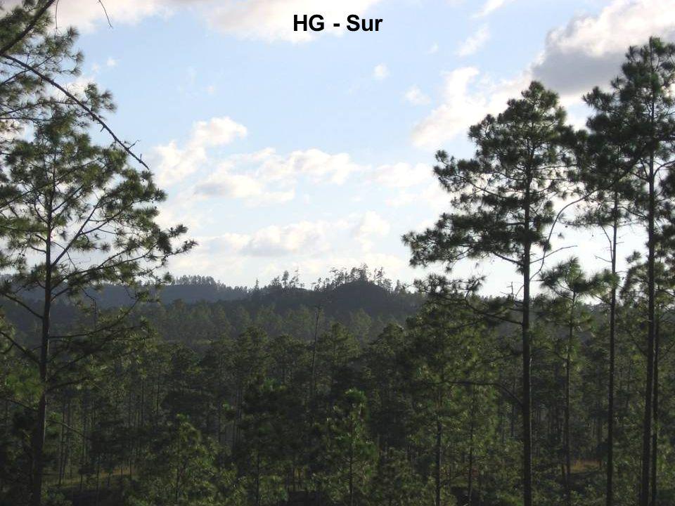 HG - Sur