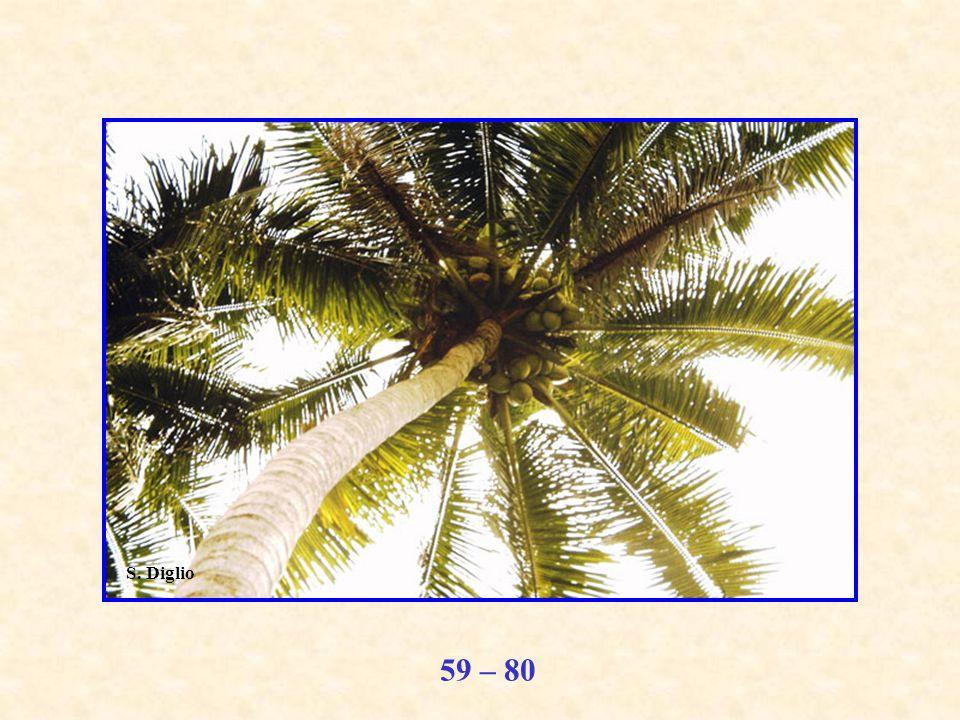 59 – 80 S. Diglio
