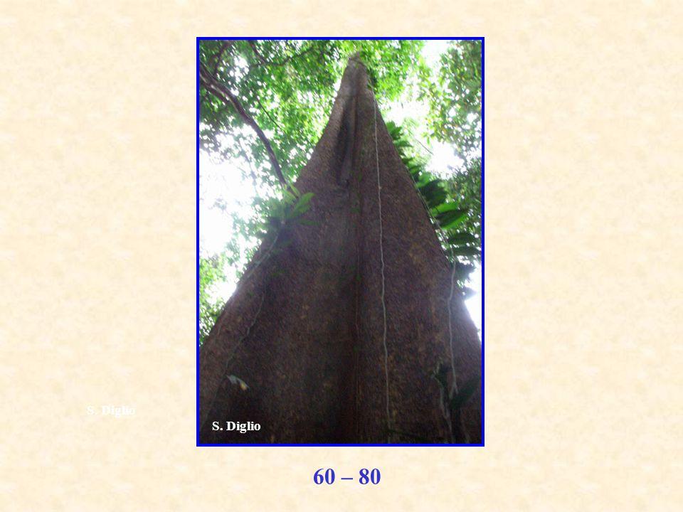 60 – 80 S. Diglio