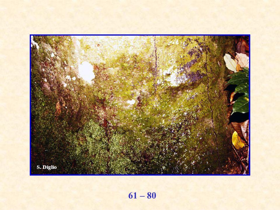 61 – 80 S. Diglio