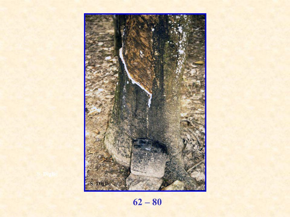 62 – 80 S. Diglio