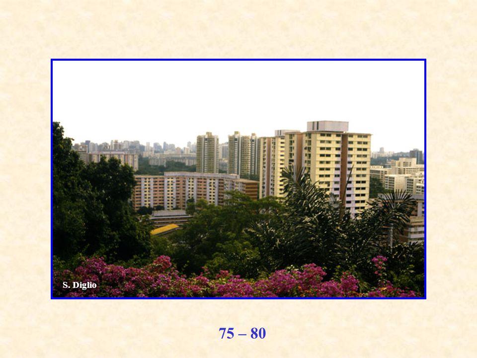75 – 80 S. Diglio