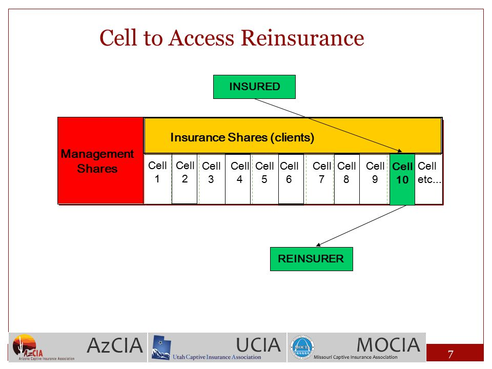 Cell to Access Reinsurance Cell 1 Cell 2 Cell etc... Management Shares Cell 3 Cell 4 Cell 5 Cell 6 Cell 7 Cell 8 Cell 9 Cell 10 Insurance Shares (clie