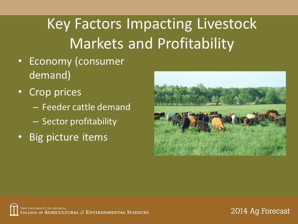 Key Factors Impacting Livestock Markets and Profitability Economy (consumer demand) Crop prices – Feeder cattle demand – Sector profitability Big picture items