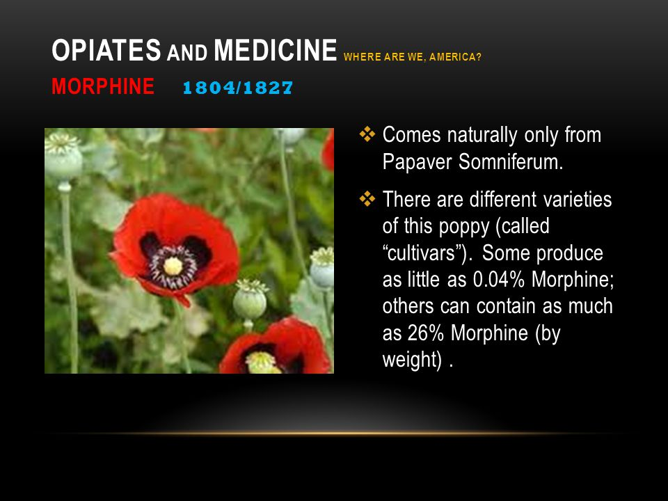 """ Comes naturally only from Papaver Somniferum.  There are different varieties of this poppy (called """"cultivars""""). Some produce as little as 0.04% Mo"""