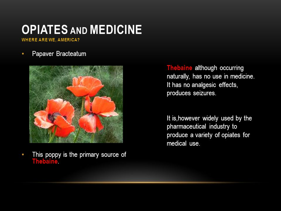 Papaver Bracteatum This poppy is the primary source of Thebaine. Thebaine although occurring naturally, has no use in medicine. It has no analgesic ef