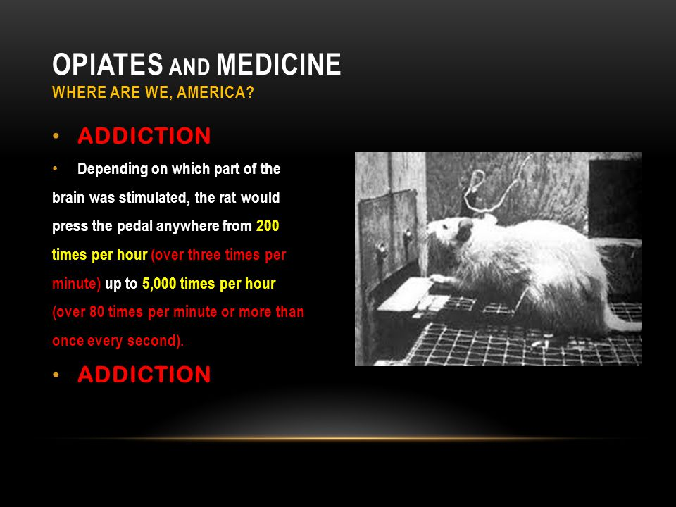 ADDICTION Depending on which part of the brain was stimulated, the rat would press the pedal anywhere from 200 times per hour (over three times per minute) up to 5,000 times per hour (over 80 times per minute or more than once every second).