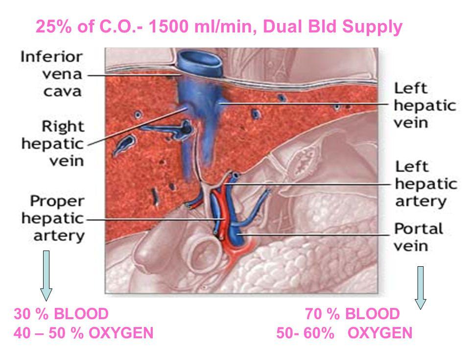 30 % BLOOD 70 % BLOOD 40 – 50 % OXYGEN 50- 60% OXYGEN 25% of C.O.- 1500 ml/min, Dual Bld Supply