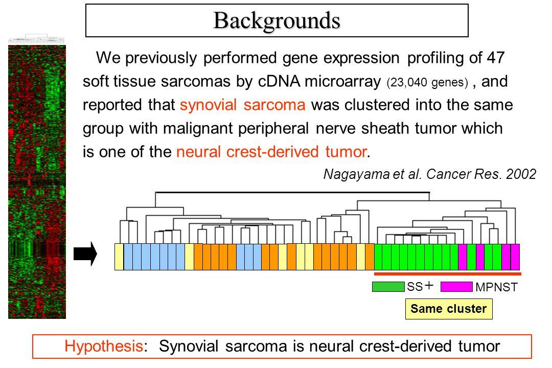 YaFuSSHS-SY-IISYO-1Fuji1273/99 Gene exp.(growing phase) ++ ± Gene exp.