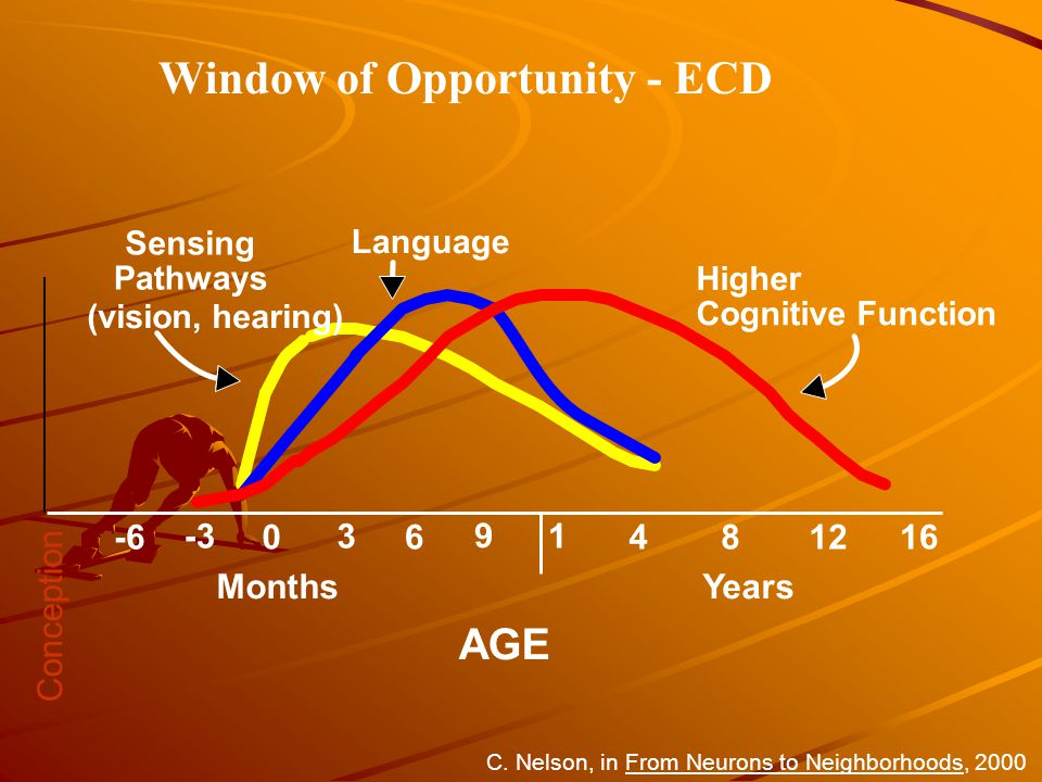 0 1 481216 AGE Sensing Pathways (vision, hearing) Language Higher Cognitive Function 3 6 9 -3 -6 MonthsYears C.