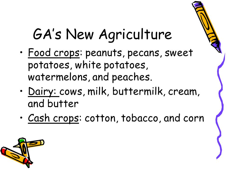 GA's New Agriculture Food crops: peanuts, pecans, sweet potatoes, white potatoes, watermelons, and peaches. Dairy: cows, milk, buttermilk, cream, and
