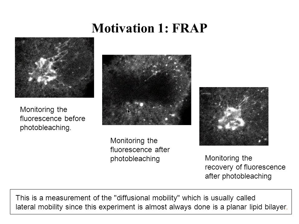 Motivation 1: FRAP Monitoring the fluorescence before photobleaching. Monitoring the fluorescence after photobleaching Monitoring the recovery of fluo