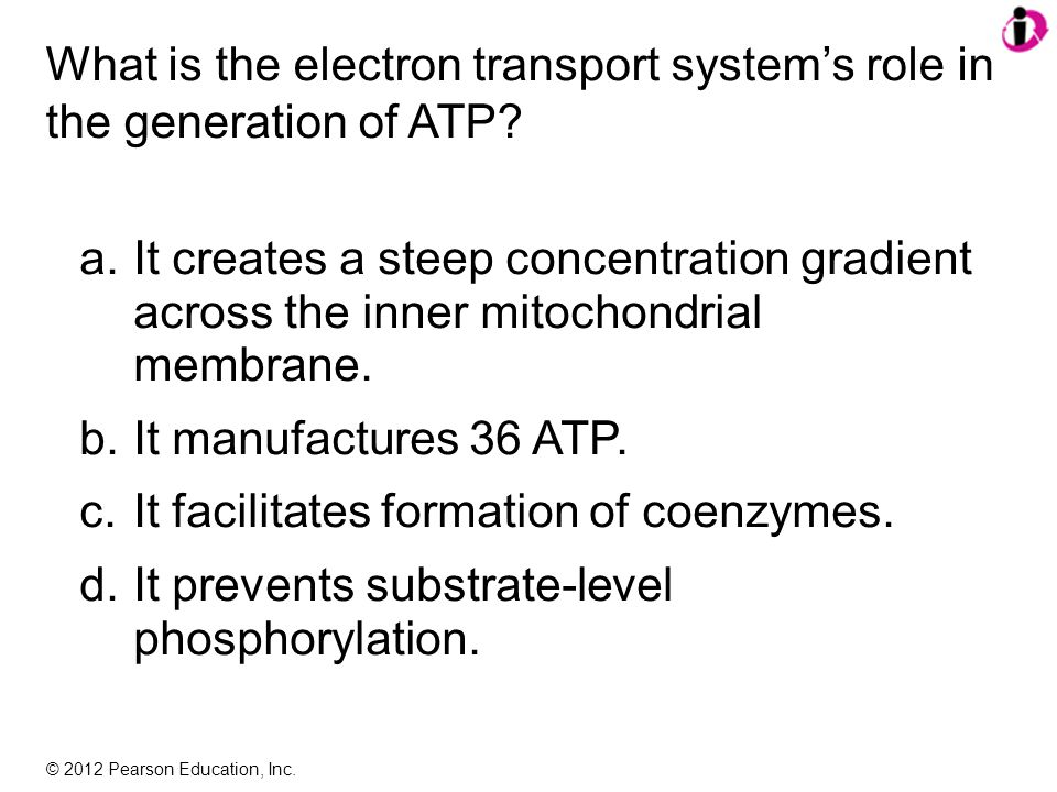 © 2012 Pearson Education, Inc. What is the electron transport system's role in the generation of ATP? a.It creates a steep concentration gradient acro