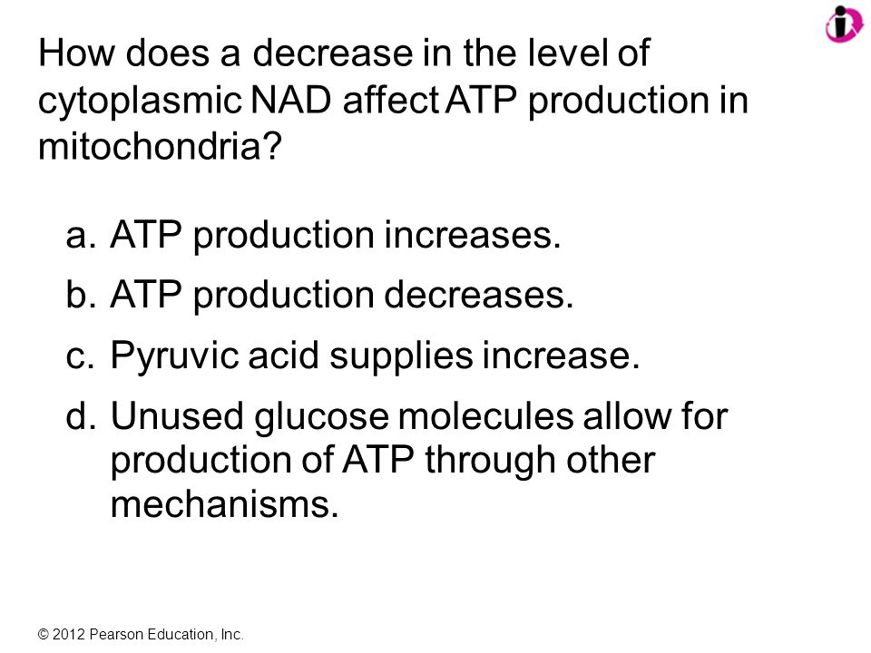 © 2012 Pearson Education, Inc. How does a decrease in the level of cytoplasmic NAD affect ATP production in mitochondria? a.ATP production increases.